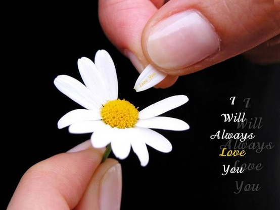 I Will Always Love You Quote Picture Simple Flower Love Quotes