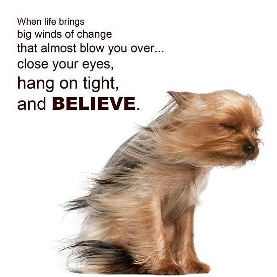 Beleive Quote Dog Picture