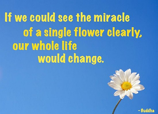Flower Change Buddha Quote