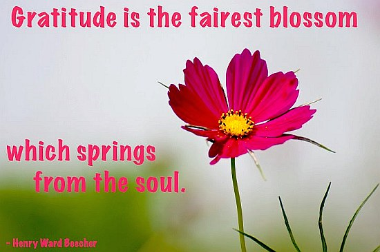 Gratitude Flower Picture Quote