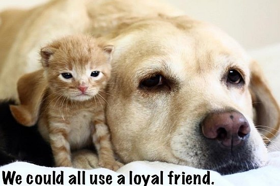 We Could All Use A Loyal Friend