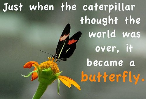 Butterfly World Quote