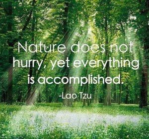 Nature Doesn't Hurry